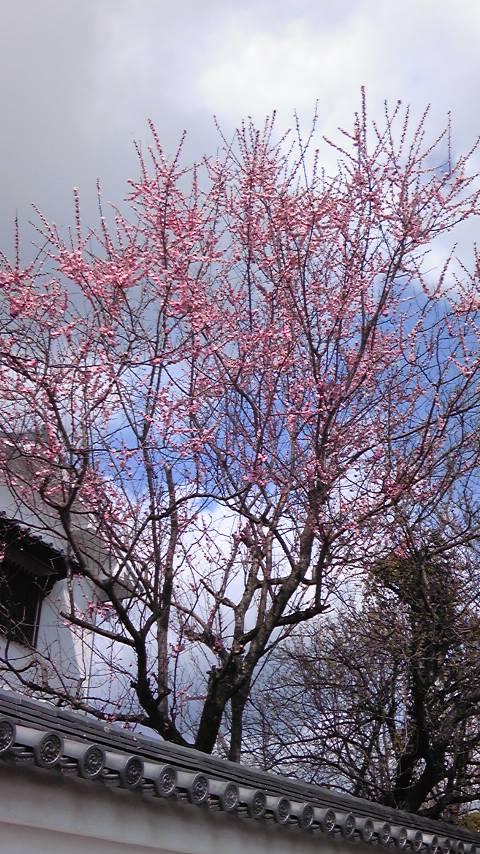 春が来た。ルルル〜画像